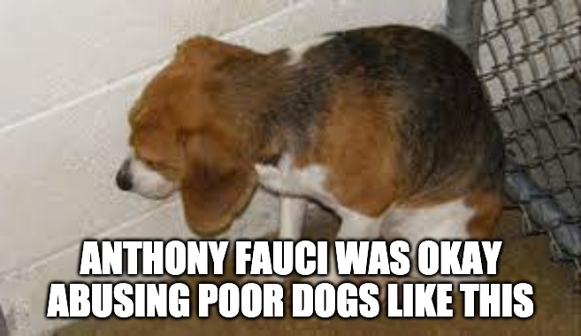 According To New Reports Anthony Fauci's Agency Spent Over $1M to Poison Beagle Puppies, Cut Out Vocal Cords so They Couldn't Bark